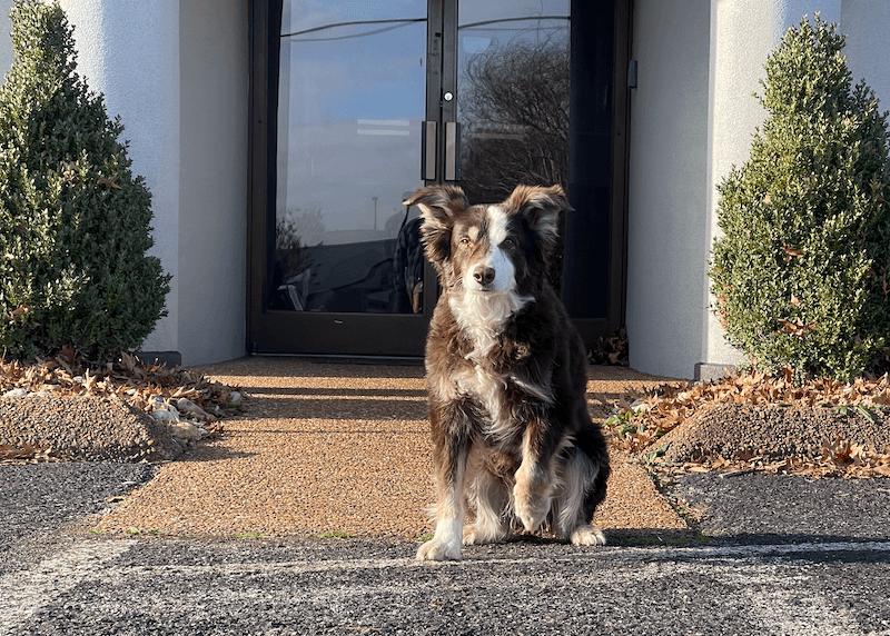 Brady in front of the office - spotlight