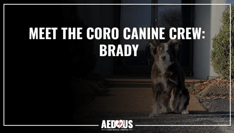 Meet the Coro Canine Crew: Brady