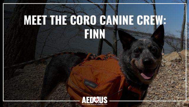 Meet the Coro Canine Crew Finn
