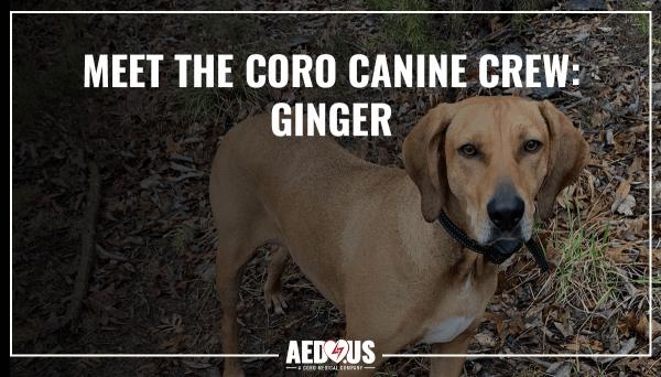Coro Canine Crew- Ginger