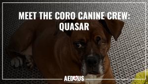 meet the coro canine crew quasar